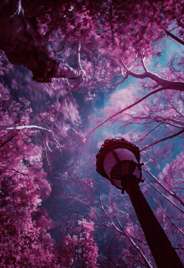 The Magic Of Infrared Photography